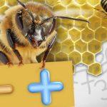 abejas cuentan y saben matematicas