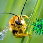 """Fortalecer tu sistema inmunológico para """"defenderse"""" del coronavirus"""