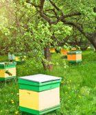 construye tu apiario barato