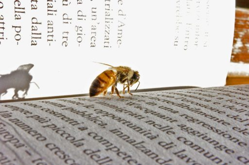 libro abeja diccionario glosario