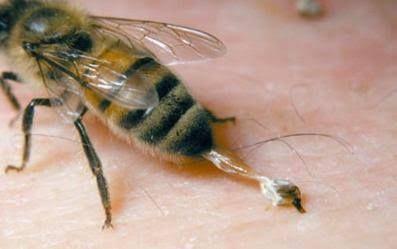 El aguijón de las abejas