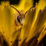 Las abejas a través del tiempo