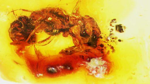 La abeja más antigua registrada Melittosphex burmensis, fosil de abeja, Las abejas a través del tiempo