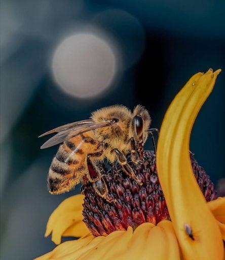 ¿Cómo podemos ayudar a las abejas?