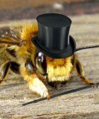 la personalidad de las abejas